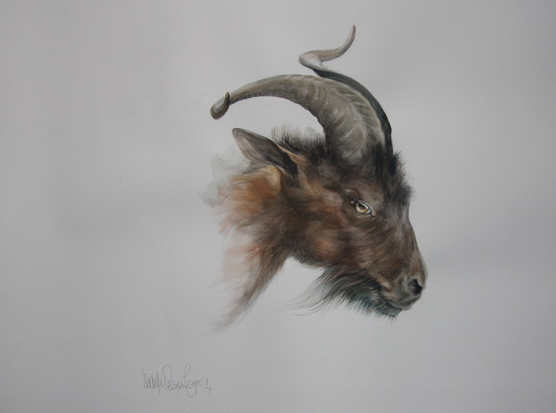 Watercolour Painting of a Goat
