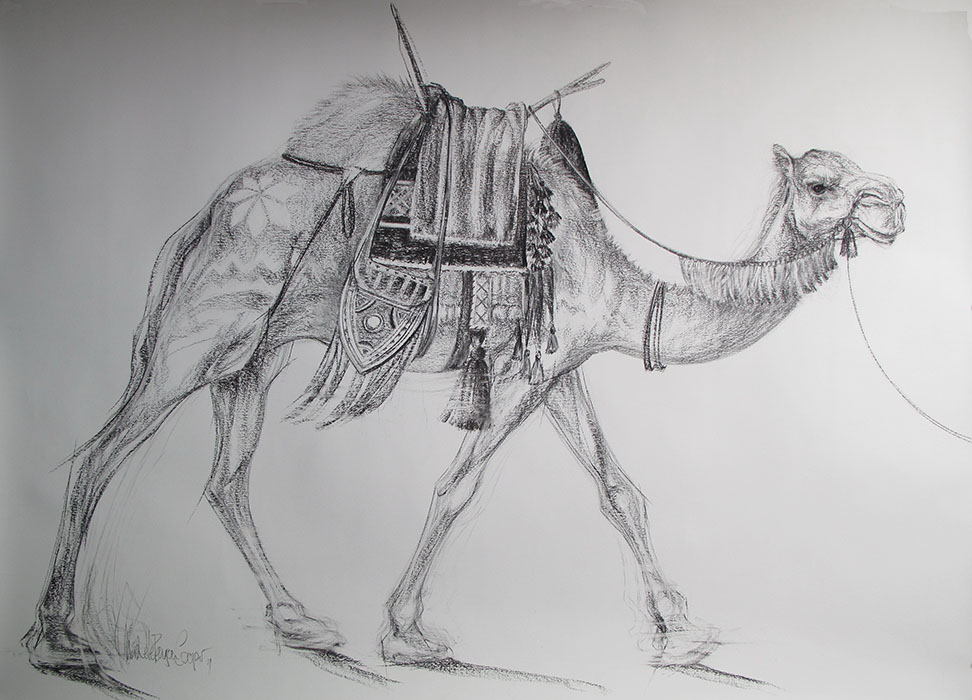 Camel Charcoal Drawing