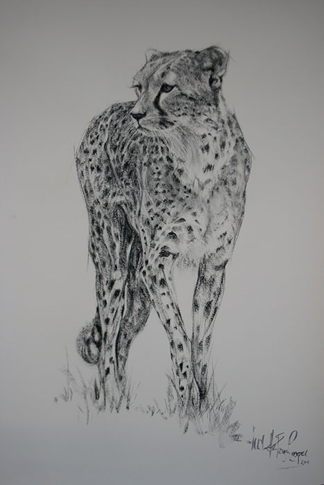 Cheetah Poised Charcoal Drawing