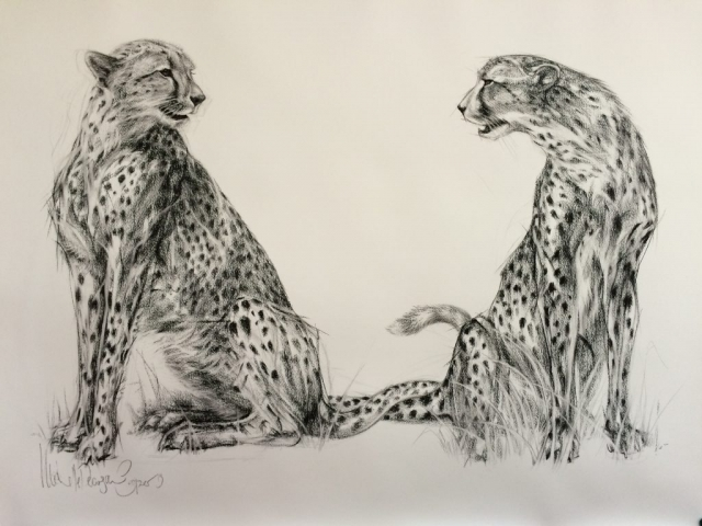 Charcoal Drawing of Two Cheetahs