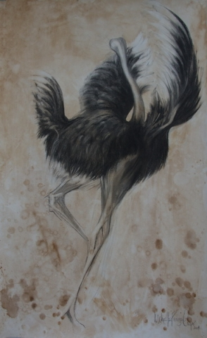 Picture of a Dancing Ostrich