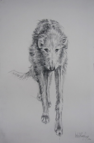 Charcoal Drawing of a Deerhound Dog