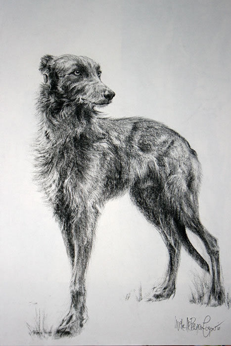 Charcoal Drawing of a Lurcher