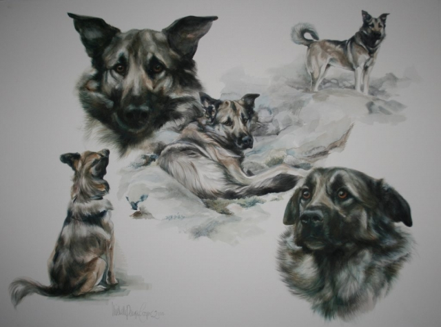 Icelandic Dog Watercolour Painting