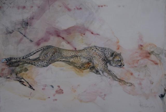Charcoal Nambian Cheetah