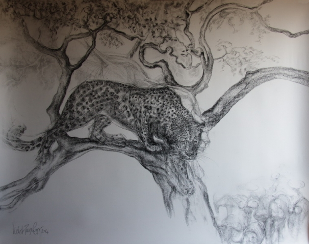 Charcoal Drawing of a Leopard