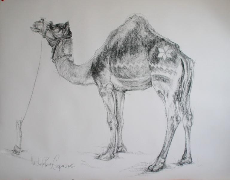Charcoal Drawing of a Pushkar Camel