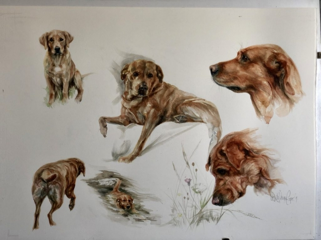 Watercolour Painting of a Red Fox Labrador