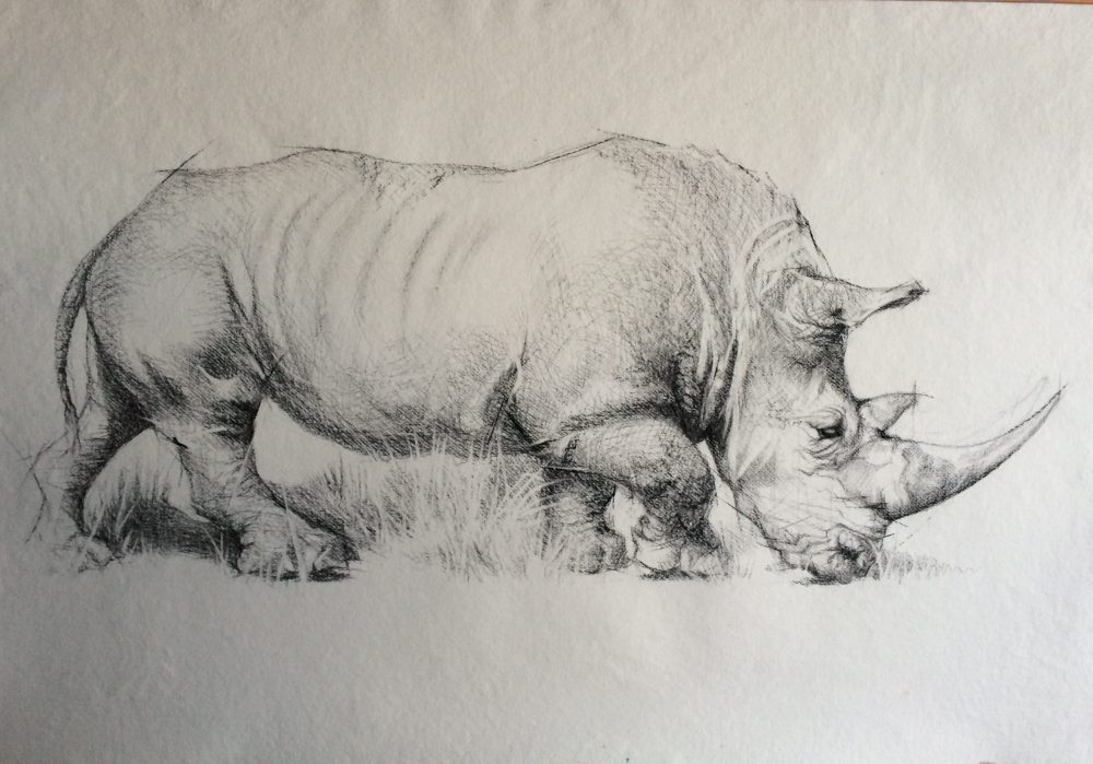 Rhino Charcoal Drawing
