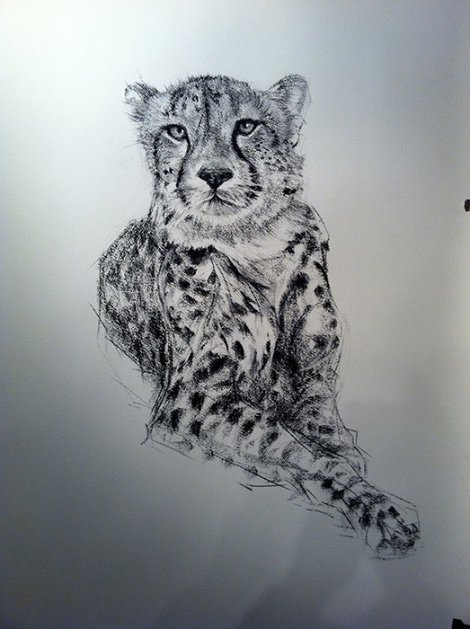 Charcoal Drawing of a Cheetah