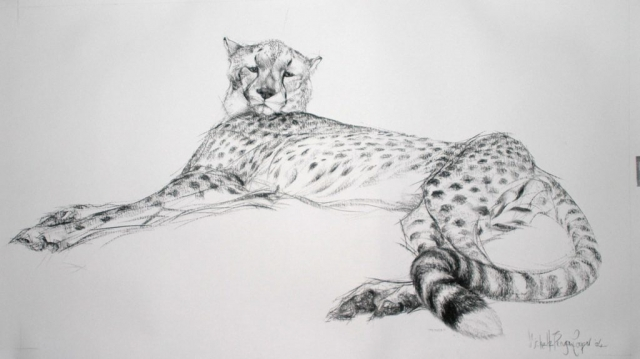 Charcoal of a Cheetah