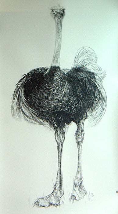 Painting of an Ostrich