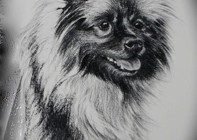 'Alfie' Charcoal on Fabriano 12 x 14 inches.
