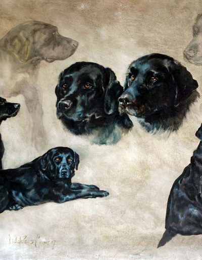 'Black Labradors' oil and pencil on gesso 24 x 30 inches