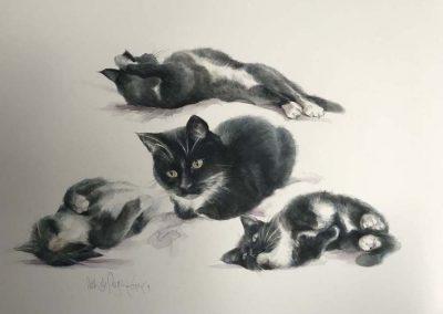 Cat Watercolour Studies 22 x 30 inches.