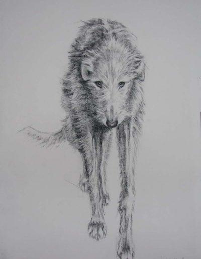 Charcoal Drawing of a Deerhound Dog