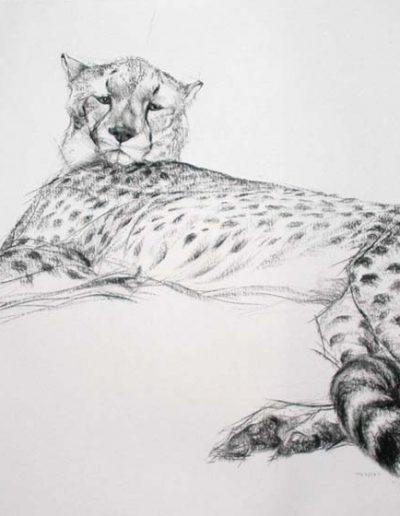 Charcoal of a Cheetah