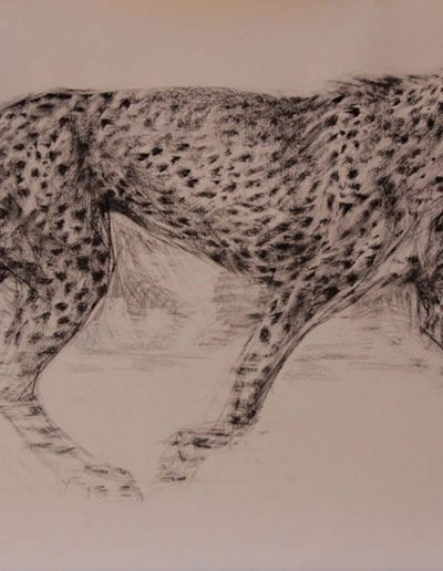 Cheetah on the Hunt Charcoal on Fabriano 36 x 60 inches.