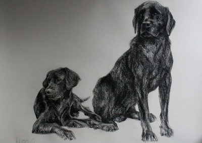 'Digby and Ozzy' charcoal on Bockingford 30 x 48 inches.