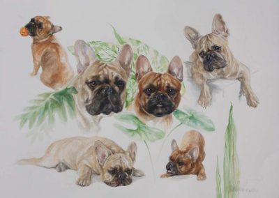 French Bulldogs Watercolour 56 cm x 76cm on Arches