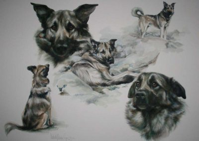Icelandic Dog Watercolour 22 x 30 inches.