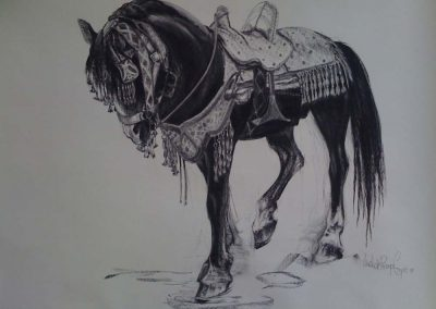 Moroccan Horse Charcoal