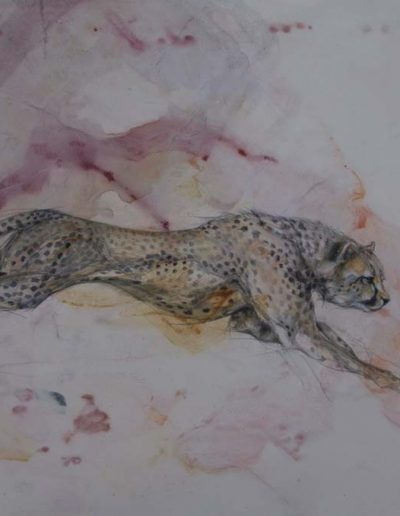 Namibian Cheetah Charcoal on Wash 22 x 32 inches. Framed