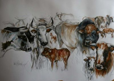 Nguni - Charcoal and Watercolour 36 x 50 inches - Framed