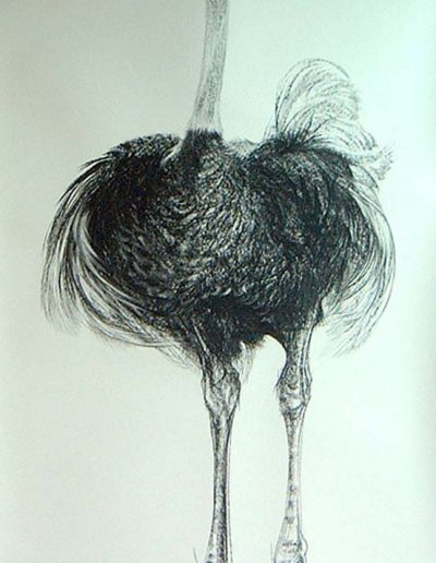 Ostrich Charcoal and Wash