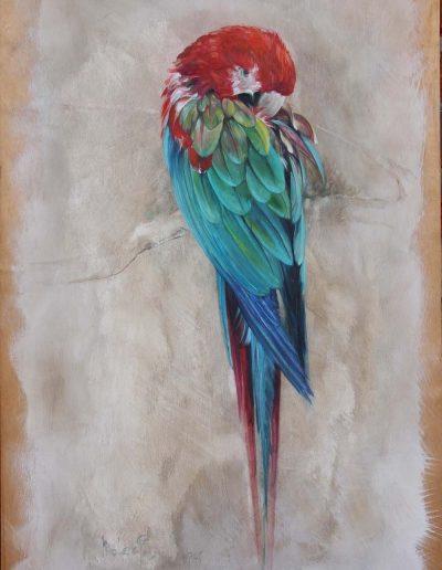 Parrot 80cm x 53cm Oil on Wood Panel