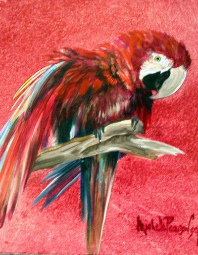 Parrot Oil on Panel 48 x 60 cm
