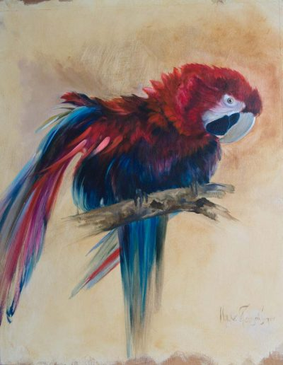 Parrot Oil on Wood Panel 75cm x 60cm