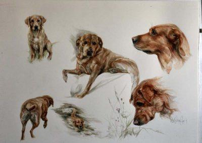 Red Fox Labrador Watercolour 30 x 22 inches