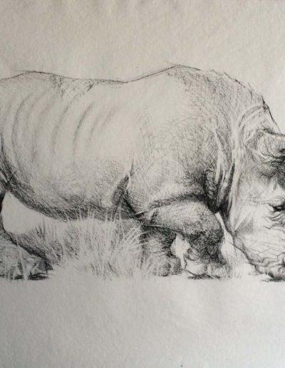 Rhino Charcoal Drawing