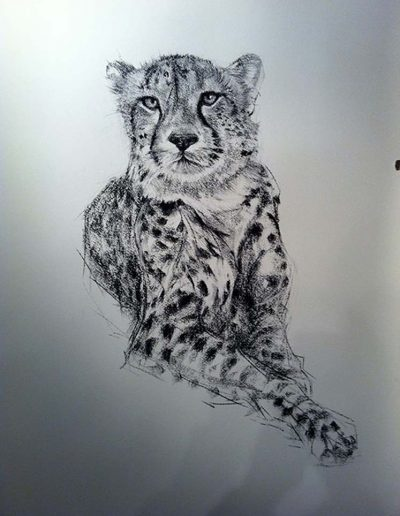 'Simbali at Ease' Cheetah - Charcoal on Arches 36 by 38 inches.