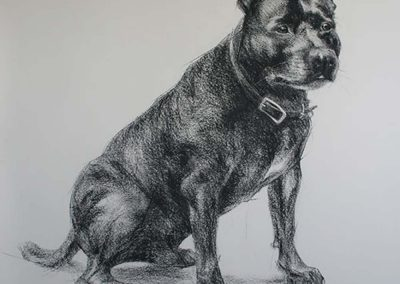 Staffordshire Bull Terrier Charcoal on Arches 36 x 48 inches.