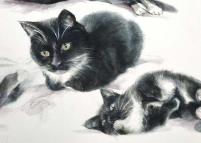 Watercolour of Cat Studies 22 x 30 inches.